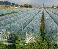 農業サンプル写真2